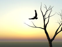 Eagle And Tree Silhouette Royalty Free Stock Image