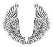 Eagle or angel wings. An illustration of a pair of angel or eagle wings spread Royalty Free Stock Images