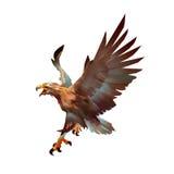 Eagle-Angriffsfarbkunst Lizenzfreies Stockfoto