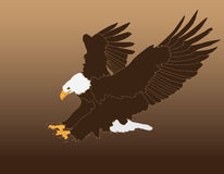 Eagle Attack Graphic chauve Photo stock