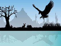 Eagle attack rabbits Stock Images