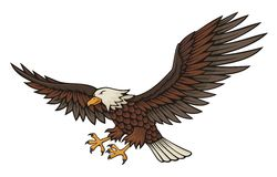 Eagle attacking Stock Image