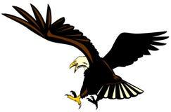 Eagle attacking Royalty Free Stock Photo