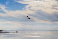 Eagle au-dessus du lac au coucher du soleil photographie stock libre de droits