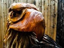 Eagle au zoo photo libre de droits
