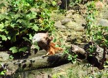 Eagle auf dem Baumast Stockfotografie