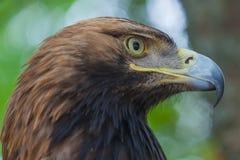 Eagle auf einem Baum im Wald Stockfotos