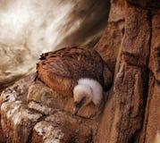 Eagle auf einem Felsen Stockbild