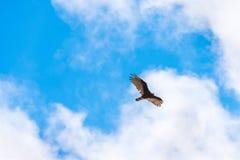 Eagle auf einem Hintergrund des blauen Himmels, Trinidad, Sancti Spiritus, Kuba Kopieren Sie Raum für Text Lizenzfreie Stockfotografie