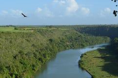 Eagle auf einem Hintergrund des Himmels und des Flusses Stockbild