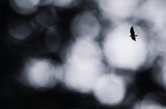 Eagle auf Himmel Stockbilder