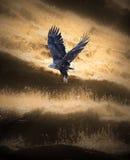Eagle-Aufzüge Stockbilder