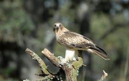 Eagle-Auge der Fahrbahn vom Wachturm Stockfotografie