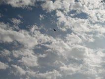 Eagle av ögat arkivfoton