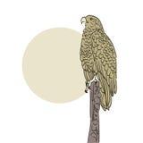 Eagle background Royalty Free Stock Image