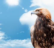 Eagle on background sky Royalty Free Stock Photo
