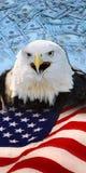 Eagle, bandera y dinero Fotos de archivo libres de regalías