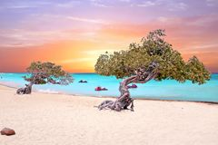Eagle beach on Aruba island in the Caribbean Sea. At sunset Royalty Free Stock Photo