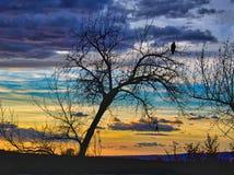 Eagle bei Sonnenaufgang Lizenzfreies Stockfoto