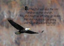 Eagle Bible Verse chauve images libres de droits