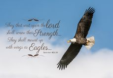 Eagle Bible Verse chauve image stock