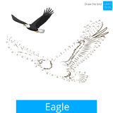 Eagle bird learn to draw vector Royalty Free Stock Photography