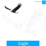 Eagle bird learn to draw vector Royalty Free Stock Photo