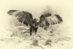 Eagle on a branch in forest. Vintage effect Royalty Free Stock Photo