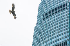 Eagle and building Stock Images
