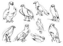 Eagle. Buzzard. Kestrel. Hawk. Golden eagle. Set. Hand-drawn. Isolated on white background Stock Photography