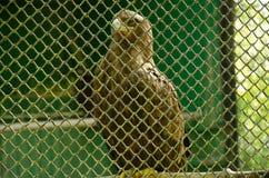 Bird of prey in a cage stock photos