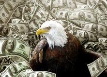 Eagle calvo en dinero Foto de archivo