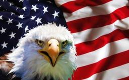 Eagle calvo nordamericano sulla bandiera americana Fotografia Stock