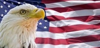 Eagle calvo y bandera americana Fotografía de archivo