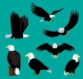 Eagle Cartoon Vector Illustration chauve Photos stock