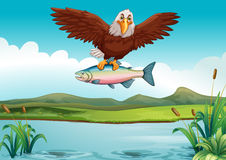 Eagle catching fish in the lake. Illustration Stock Images
