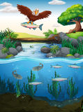 Eagle catching fish in the river. Illustration stock illustration