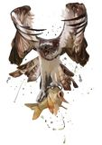 The eagle caught the fish. Watercolor painting. White background Royalty Free Stock Images