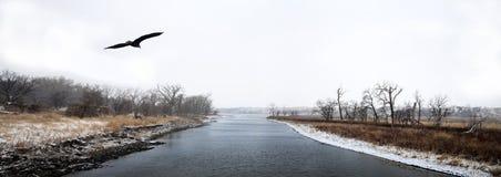 Eagle chauve américain montant au-dessus de James River photos stock