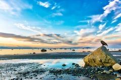 Eagle chauve observant un coucher du soleil renversant sur l'admission de cuisinier dans Alask photo stock