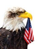 Eagle chauve se tient dans le bec du drapeau des Etats-Unis Photos libres de droits