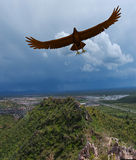 Eagle In Civilization. Rendered gagle flying near houses in mountains Stock Photography