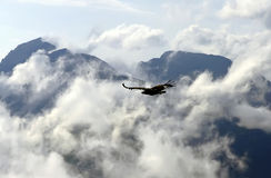 Eagle in clouds Stock Photos