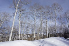 Eagle, Colorado, bosque Fotografía de archivo