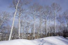 Eagle, Colorado, Wald Stockfotografie