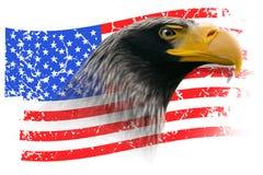 Eagle con la bandiera americana di lerciume isolata Immagine Stock Libera da Diritti