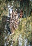 Eagle-coruja Foto de Stock Royalty Free