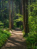 Eagle creek trail. The Eagle Creek trail in the Columbia River Gorge Royalty Free Stock Photography
