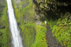 Eagle Creek Trail in Oregon. Eagle Creek Trail at Tunnel Falls Along Royalty Free Stock Photography