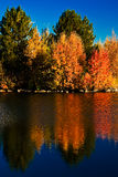 Eagle Crest Autumn. Autumn colors are reflected in Eagle Crest Pond near Redmond, Oregon Royalty Free Stock Photography
